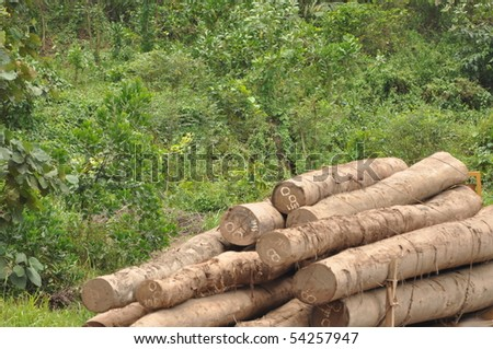 Clearance of the rainforest
