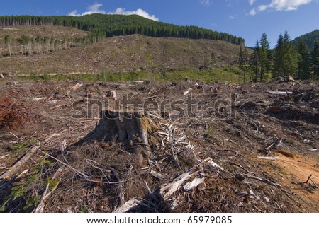 Clearcut forestry in British Columbia Canada.