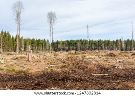 Clearcutting area in the forest
