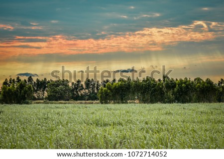 Clearing in the forest in sunny summer morning Beautiful colors Can be used as a perfect background image #1072714052