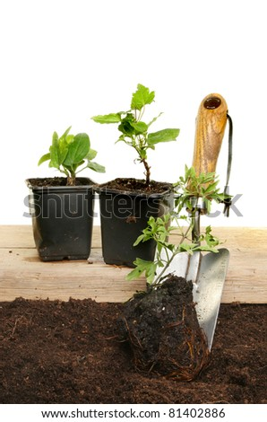 Clematis plants soil and a garden trowel on a wooden board