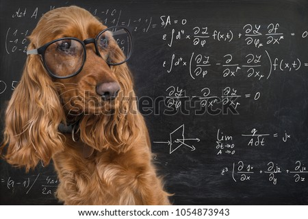 Clever funny dog wearing eyeglasses. Math equations on blackboard in background.