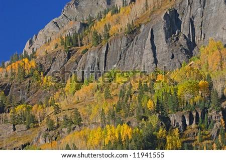 Cliff with autumn aspens, San Juan Mountains, Colorado, USA