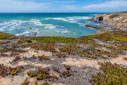 Cliff with carpobrotus edulis - Aerial view of seascape with brilliant and turquoise water of Almograve beach, Vicentine Coast Natural Park - Odemira PORTUGAL