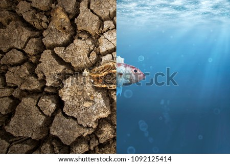 Climate Change and Global warming concept. Fish bone on cracked earth and Fish in ocean metaphor climate change impact to Aquatic Animals
