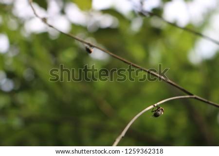 climbing flies, House fly, Fly, House fly on leaf