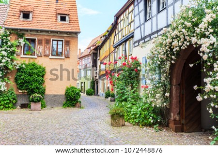 Climbing roses near old houses in the narrow medieval german street. Old frame house in medieval city, Germany