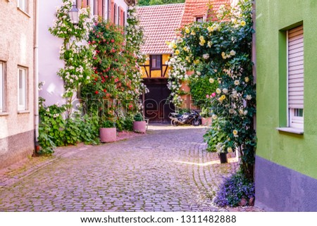 Climbing roses near old houses in the narrow medieval german street. Roses in old German city