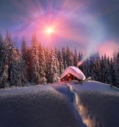 Climbing to tourist wild alpine mountain to an abandoned cabin-in order to illuminate the snow-covered spruce canopy during new, sunrise, sunset, to see the first star of Christmas in the Carpathians.