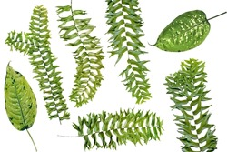 clipart fern leaves on a white background
