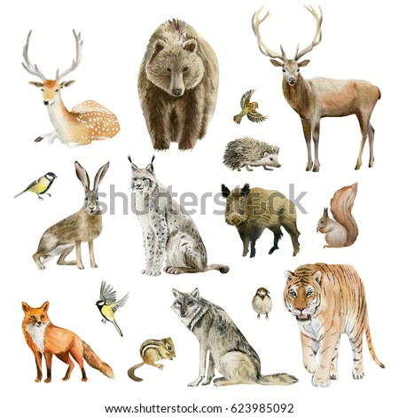 Shutterstock Clipboard set of watercolor hand drawn group of animal cliparts - birds, predators and preys, grass-feeding and rodents