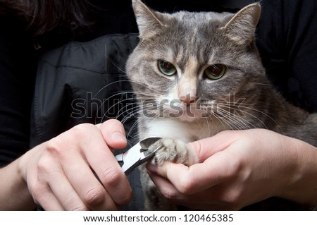 clipping claws of a cat - a necessary concern for pet