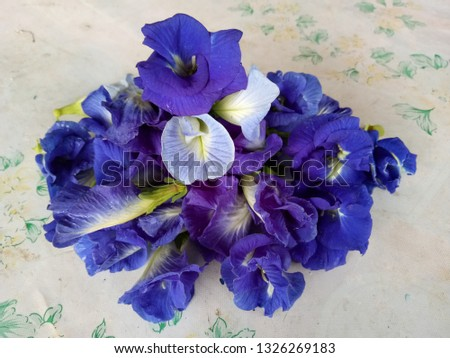Clitoria ternatea, commonly known as Asian pigeonwings, bluebellvine, blue pea, butterfly pea, cordofan pea and Darwin pea,