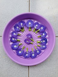Clitoria Ternatea flower  on top of a purple plastic container. Telang flower (Indonesian). This flower can be used as herbal medicine.