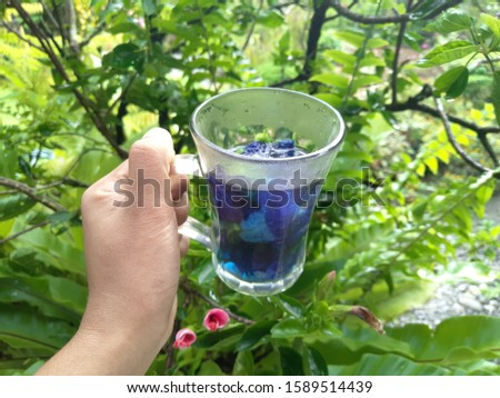 Clitoria ternatea flowers tea in a transparent glass cup held by left hand. This plant is commonly known as Asian pigeonwings, bluebellvine, blue pea, butterfly pea, cordofan pea and Darwin pea