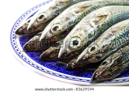 Close detail view of a dish filled with Atlantic mackerel fish isolated on a white background.