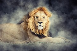 Close male lion in smoke on dark background