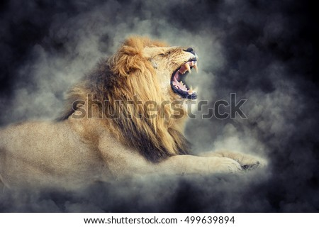 Close male lion in smoke on dark background #499639894