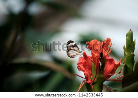 close micro shot of beautiful butterfly on flower..
