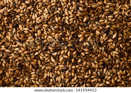 Close photo up of malt grains