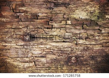 close rotten wood