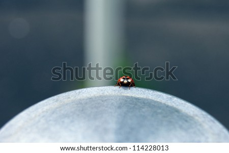 Close shot of a ladybug (Coccinellidae), peering over the edge of a sidewalk post/balance