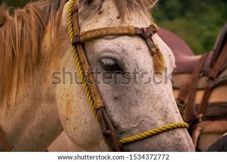 Close shot of a white horse looking closely