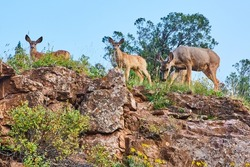 Close shot of group of deer looking down from top of cliffs