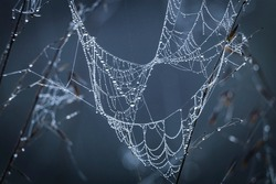 Close up abstract art macro photography of cobweb or spiderweb with rain or dew water drops in the morning fog. Natural abstract background.