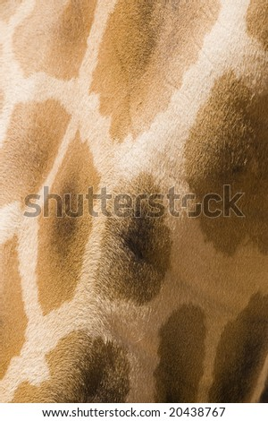 Close up abstract/texture photo of giraffe fur