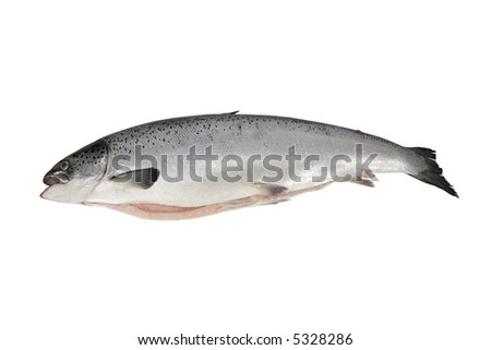 Close-up and isolation on a dead snook - stock photo