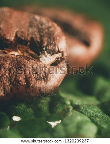 Close up angle with fresh roasted coffee beans on a green mint leaf