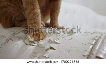 Close up at cat's paws standing on cat scratched damaged white leather sofa. Foto stock ©