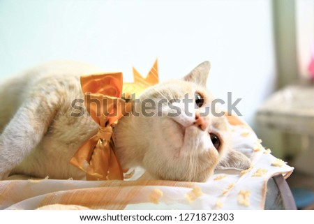 close up at cat scratched damaged white sofa.blurred bright orange cat sleeping on chair
