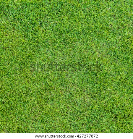 close up background of beautiful green grass pattern from golf course at sunset time - Shutterstock ID 427277872