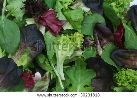 Close Up Background of Mixed Green Lettuce