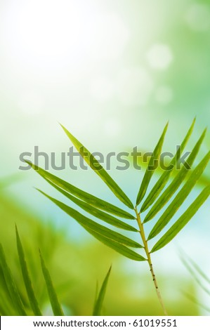Close up bamboo leaves with copy space on top #61019551