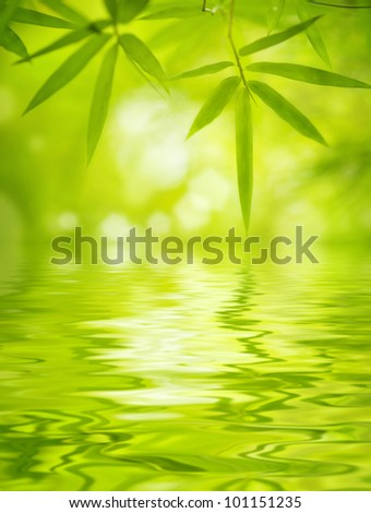 Close up bamboo leaves with water reflection, soft focus