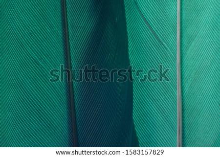 Close up Beautiful Aqua Menthe Bird feather background texture. Macro photography view.  Stock photo ©