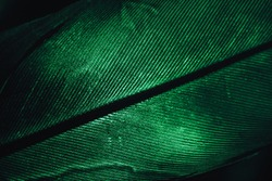 Close up Beautiful GREEN Bird feather background pattern texture for design. Macro photography view.