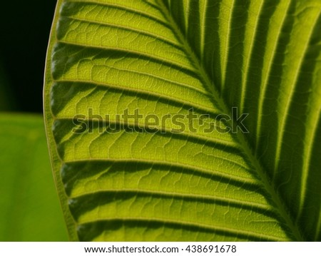 close up:beautiful leaf with sunlight #438691678