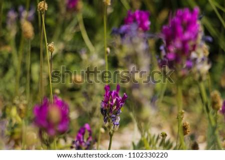 close up beautiful violet cornflower bokeh/ colorful background
