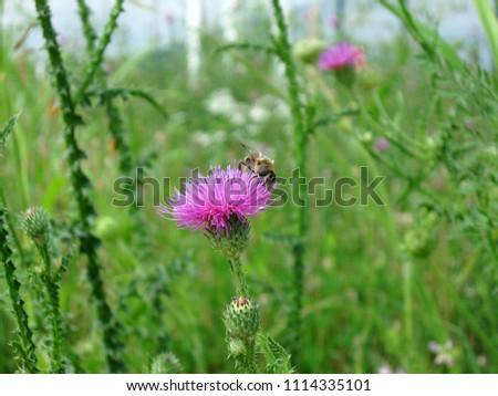 Durdock flowers  Bur Weed, California… Stock Photo 451009345