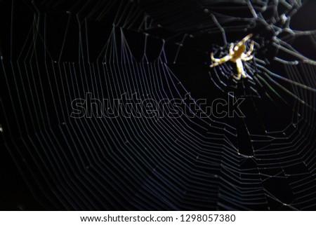 Close up beneath under belly spider arachnid on spider web cob web at night with black background 2 #1298057380