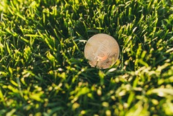 Close up bitcoin, coin of golden color on vibrant spring green fresh grass, sunshine lawn. Nature texture, green background for wallpaper. Soft focus. Field, finance design, virtual currency concept
