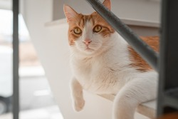 close up. brown and white cat  with yellow eyes lying on the stairs