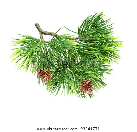 Close up brunch of  of fir tree isolated on white