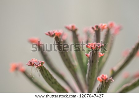 Free photos Mother of Thousands plant | Avopix.com on plant care, plant life in mexico, plant called string of hearts, plant called crown of thorns, plant mother of the world,