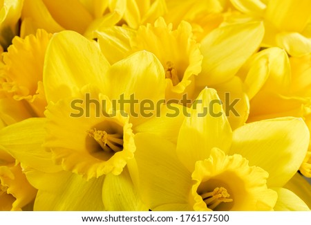 close up bunch of yellow...