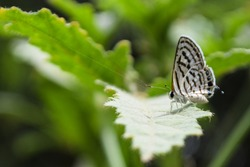 close up butterfly on green plant leaf in garden, grass background insect animal wildlife outdoor arthropods, small beauty, environmental, natural, macro